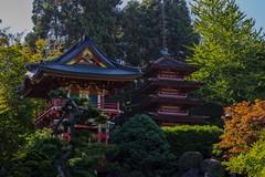 Tea Garden II (carmenalejandra.delatorre) Tags: park trees red green garden japanese tea goldengate