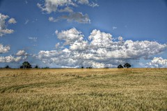 Fields (patrick.verstappen) Tags: hdr gingelom belgium fields photo picassa pinterest pat picmonkey ipernity ipiccy yahoo flickr facebook google nikon d7100 sigma summer