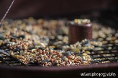 smorgasbord (Urban.Photography) Tags: food backyard birdseed bokeh seeds sunflowerseeds traybirdfeeder