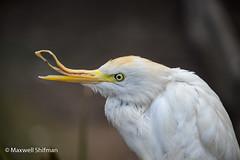 Bird with deformed beak