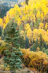 _MG_3376.jpg (notsnot) Tags: autumn usa mountains canon colorado unitedstates roadtrip co sanjuans ridgway sanjuanmountains autumncolor ef70200f4l cr9 5dmkii westdallascreekroad