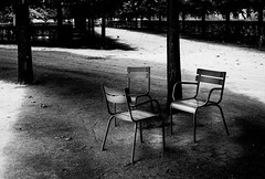Tuileries, Paris (Les Wilcockson) Tags: leica trees blackandwhite bw paris france tree leaves contrast landscape tuileries lightroom leicasummicron leicam82 leswilcockson leswilcockson2013