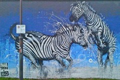 Zebra (Bonito Club) Tags: streetart footscray flickrandroidapp:filter=none 2013pad