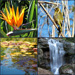 Zen hour (Cathlon *TryingtoCatchupCommentsagain*) Tags: bird collage southafrica waterfall pond waterlilies zen hour pretoria botanicalgardens strelitzia weaverbird oneplace monetinspired scavchal20
