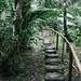 DAS Ayahuasca retreat - Iquitos