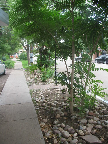 Photo - 15th Street Streetscape Improvements (Planning/Design)