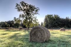 Field of Bales (dngovoni) Tags: blinkagain bestofblinkwinners blinksuperstars