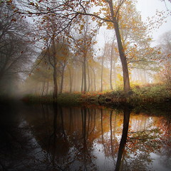 This is Autumn........... (Eric Goncalves) Tags: november autumn england color nature fog forest reflections gloucestershire forestofdean canon7d tamronspaf1024mm ericgoncalves {vision}:{outdoor}=0896 {vision}:{sky}=0766