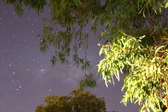 View From Here (wscaster) Tags: nightphotography trees tree leaves night stars nightsky gumtree brokenhill