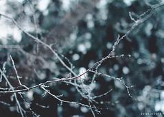 Snow (ttrangdoann) Tags: life winter light snow nature norway canon photography moss bokeh sigma50mm canon7d butdeanfoto butfoto butdeanphotography