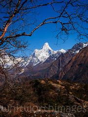 Ama Dablam (whitworth images) Tags: nepal white snow mountains cold tree nature trekking landscape outdoors nationalpark asia branch view scenic scene hills snowcapped valley birch peaks himalaya barren khumbu everest range amadablam sagarmatha solukhumbu syangboche sagarmathanationalpark