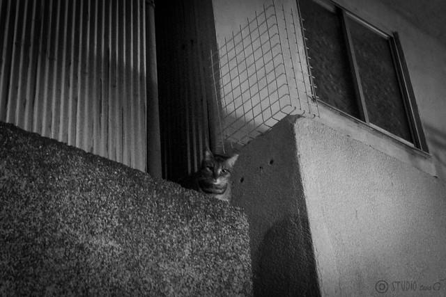 Today's Cat@2014-01-31