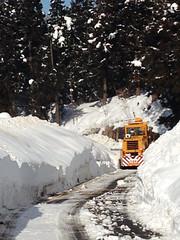 increíble cuánta nieve