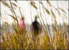 En la playa (Adisla) Tags: enna mar olympus f45 m42 mf munchen manual em1 240mm