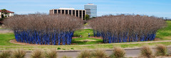The Blue Trees, Memorial at Waugh, Houston, Texas 1402151261 (Patrick Feller) Tags: blue trees art installation memorial waugh drive houston texas buffalo bayou harris county konstantin dimopoulos united states north america