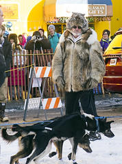 A Iditarod racing offical watches over the dogs at the Ceremonial start on Fourth Avenue in downtown Anchorage. (Bower Media) Tags: huskies nome teamwork dogsled sportsphotography iditarod cookinlet restart anchoragealaska sleddograce ceremonialstart iditarodsleddograce melliniumhotel larrydonoso nikond3s photoslarryadonosobowermediastaff larryadonoso 2014iditarod photolarryadonosoanchorage