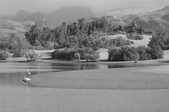 Paisaje Charca, dunas y cumbre de Gran Canaria en BN