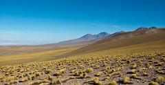On our way to Laguna Miscanti, Atacama, Chile (Miche & Jon Rousell) Tags: chile blue lake southamerica argentina yellow volcano desert turquoise lagoon atacama andes laguna altiplano sanpedrodeatacama atacamadesert lagunamiscanti lagunamenique