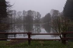 Reflections (Explored 2015-02-20) (Gisou68Fr) Tags: étang brume hiver winter eau reflets alsace france étangstgangolf schweighouselautenbach reflections