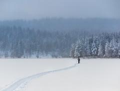 (Svein Nordrum) Tags: winter light lake snow ski nature norway landscape woods scenery track skiing atmosphere xc wilderness xcskiing nordmarka rottungen g1xmarkii g1xmii