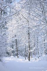 Snow covered trail in Binz, Switzerland Dec. 2014 by R. Burri Photography (R. Burri Photography) Tags: winter snow forest photography switzerland trail covered richard fotos wald burri binz burrifotos