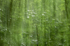 Morning in the Woodland (melcolliephoto) Tags: tree green forest cornwall multipleexposure icm portreath
