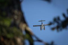 float plane (kevin.boyd) Tags: blue trees sky blur west plane coast pacific northwest aircraft seaplane pontoons pontoon floatplane