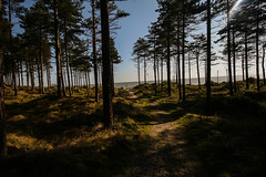 Path, Forest, Beach (Costigano) Tags: trees ireland light sea irish sunlight seascape nature forest canon woodland eos woods scenery shadows outdoor path scenic pines raven wexford curracloe camhino