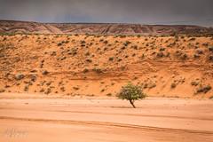 The Lone Ranger . . . (Dr. Farnsworth) Tags: arizona orange tree river spring bed sand sandstone famous dry az canyon page ng slot nationalgeographic asbeautifulasyouwant naturescarousel april2016