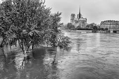 Paris under Water - June 2016 (marianboulogne) Tags: blackandwhite bw paris france water monochrome seine river mono noiretblanc notredame notredamedeparis pary francja powd cathdralenotredamedeparis