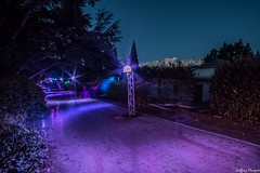 Purple path (NewOc7) Tags: light festival garden queenstown luma