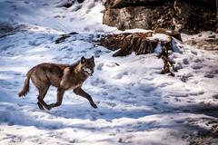 Omega-3944 (john.frappier) Tags: nature wildlife parcomega