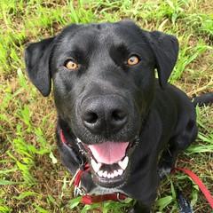 Pedro #mydog #bestdog #pedro #instadog #instadogs #family #familytime #nofilter (Elena Dotti) Tags: dog square squareformat mydog bestdog iphoneography instagramapp
