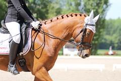 IMG_2576 (dreiwn) Tags: horse pony horseshow pferde pferd equestrian horseback reiten horseriding showjumping dressage reitturnier dressur reitsport dressyr ilsfeld dressuur ridingclub junioren ridingarena pferdesport springreiten reitplatz reitverein dressurreiten dressurpferd dressurprfung tamronsp70200f28divcusd jugentturnier