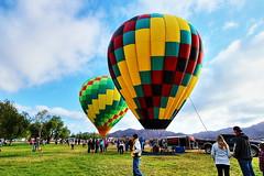 Temecula Valley Balloon & Wine Festival (Albert Jafar) Tags: people outdoor bluesky hotairballoons ballooning riversidecounty recreationarea lakeskinner photographerswharf 2016temeculavalleyballoonwinefestival