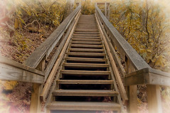 Stairs going up (atitsince82) Tags: california wood bridge red tree philadelphia up leaves yellow fog stairs turn forest landscape hotel wooden stair walk foggy rail down hike grill lobby made trail staircase jungle twig marsh railing turning manufactured
