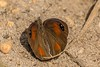 PGC_2276-20151005 (C&P_Pics) Tags: southafrica places capetown za westerncape insectsandspiders southafrica2015