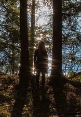 Waterfront 2 (bjorbrei) Tags: trees lake oslo norway backlight forest trunks glimmer maridalen glimmering maridalsvannet