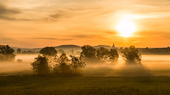 Foggy morning (janeway1973) Tags: morning trees fog sunrise nebel foggy meadow wiese bäume sonnenaufgang morgen backlighting gegenlicht neblig