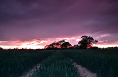 Colworth Dusk 2 (hall1705) Tags: trees sky nature field clouds nikon westsussex dusk treeline landacape d3200 colworth