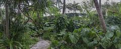 DSC07513NX5Na  Four Arts Gardens  2016 Paul Light (Paul Light) Tags: panorama florida panoramic photomerge palmbeach botanicalgardens fourartsgardens reallyrightstuffpanokit