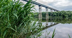 The Bridge through Pivdennyi Buh (Alex Demich) Tags: bridge trees sky reflection green reed nature water cane clouds river landscape grey stream cloudy outdoor buh pillar surface ukraine shore pivdennyi