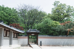 # (David C W Wang) Tags: lake tree day korea seoul gyeongbokgung          sel2470z sonya7ii