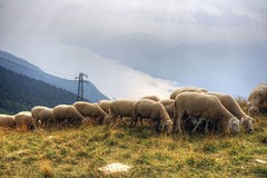 Mandria di Lago di Garda (Nanak26) Tags: summer italy color canon garda colorful italia view sheep couleurs flock panoramic paragliding herd hdr couleur malcesine lakegarda parapente montebaldo troupeau lacdegarde