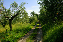 Trail in the nature (LaDani74) Tags: landscape countryside country natura campagna tuscany gras toscana olivi