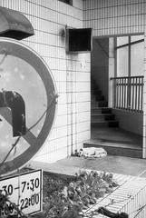img118 () Tags: street film blackwhite sence