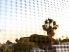 Grided Palm (jawsnap.photo) Tags: sunset tree pattern g screen palm project365 jawsnap wwwjawsnapnet