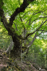 Sottobosco - Montarbu (Rob McFrey) Tags: sardegna nature natura bosco barbagia seui montarbu