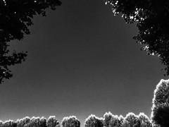 L'immaginazione è più importante della conoscenza . A.Einstein (Elena Costa Phographer) Tags: three alberi conoscenza snap instaphoto photo picture foto immaginare