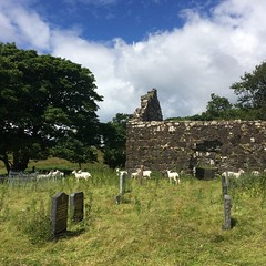 Ancient Chapel, With Added Sheep (jennyfur53) Tags: eigg